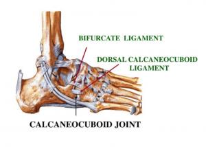 Bifurcate Ligament